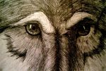 The eyes of the beast by LexFerran