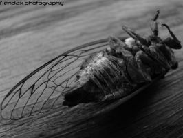 Dead Insect by Ethiopia