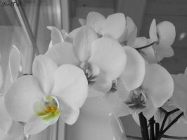 Orchid by RexTull