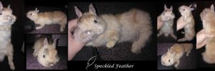 Bunny soft mount by Speckled-Feather