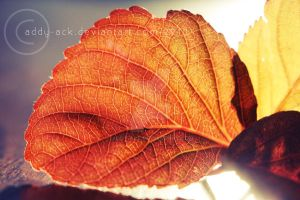...Autumn lines by addy-ack
