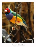 Colorful bird by zozzy1980