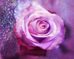 Lovely Rose by deiaof