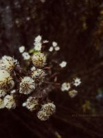 old flowers by noxyzz