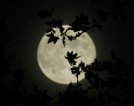 Moon leaves by andanzza
