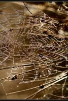 Spiders Web by VisionPhotography