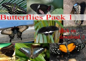 Butterflies PACK 1 by whynotastock