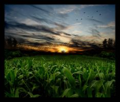 Cornfield Sunset by Jenna-Rose