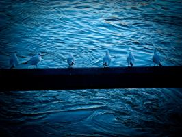 Gulls by EligoDesign