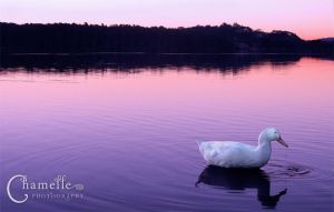 Tranquility by chamelledesigns