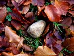 Rock in the leaves by Serpin