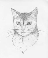 Cat face by Comrade47