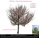 Tree with pink blossoms by YBsilon-Stock by YBsilon-Stock