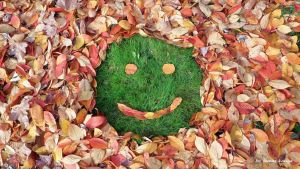 Autumn smile in Hungary by tamas kanya by tom-tom1969
