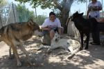 Wolf Sanctuary 4 by sugarpoultry
