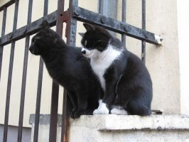 Cat and Cat by VittorioMatteo