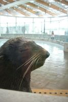 Boston Aquarium Seal by PureIdiocy