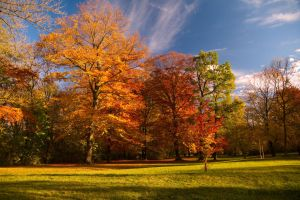 Autumn in Munich by friedapi