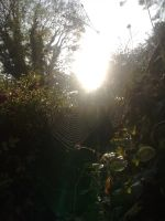 Spider web by EloiseS16