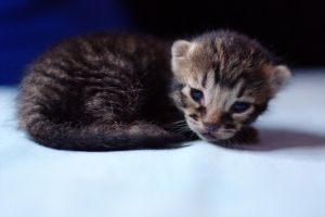 NewBorn by Mikiwe