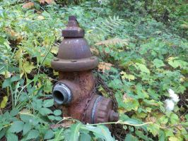 Antique Fire Hydrant in the Woods by Melanie76