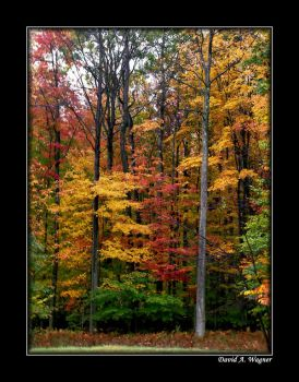 Colors of Autumn by David-A-Wagner