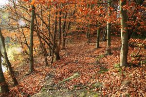 place - 020 Autumn Forest by thalija-STOCK