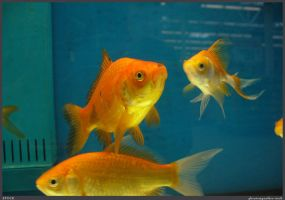 Fish Stock 0045 by phantompanther-stock