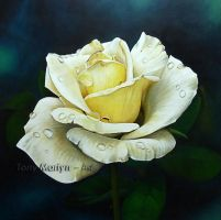 White Rose by TonyMartyn
