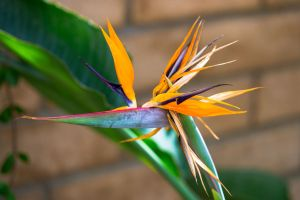 Regal Bird of Paradise by zootnik