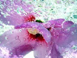Pink Flower in water by Poof2507
