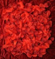 Red Silk Rose Pedals 008 F by MichaelGBrown