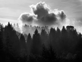 trees in the afternoon by VaggelisFragiadakis