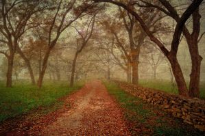 A walk in the Fog by labba1