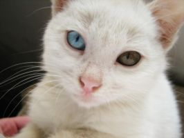 :pink nose: by puszika