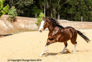 Brumby/Clydie movign into canter by Chunga-Stock