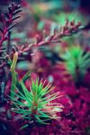 Puffy Pine by DaXXe