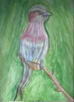 Colorful Bird Watercolors Practice by Dracosia