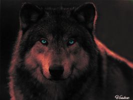 Wolf by Vortex-