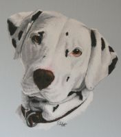 'Buster' in Acrylics by Clayofmyclay