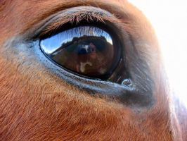 Horse Eye by hanovarianx