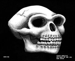 Homo Erctus Skull by Frohickey