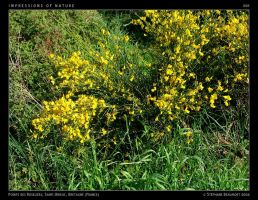 IMPRESSIONS OF NATURE 008 by Bispro