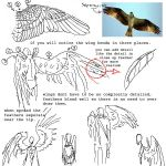 tutorial: wings by fishbot