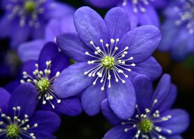 Blue Flowers by photo-freak19