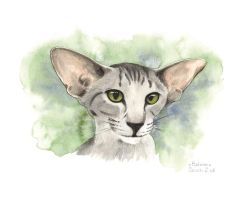 Oriental cat by saraquarelle