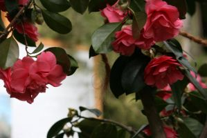 view to camellias 12 by ingeline-art