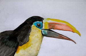 The Toucan by artifexus