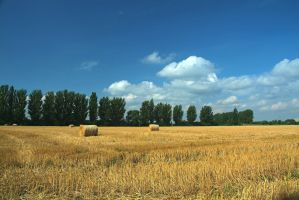 harvest by vw1956stock