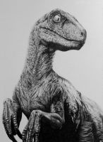 Clever Girl by Titan360